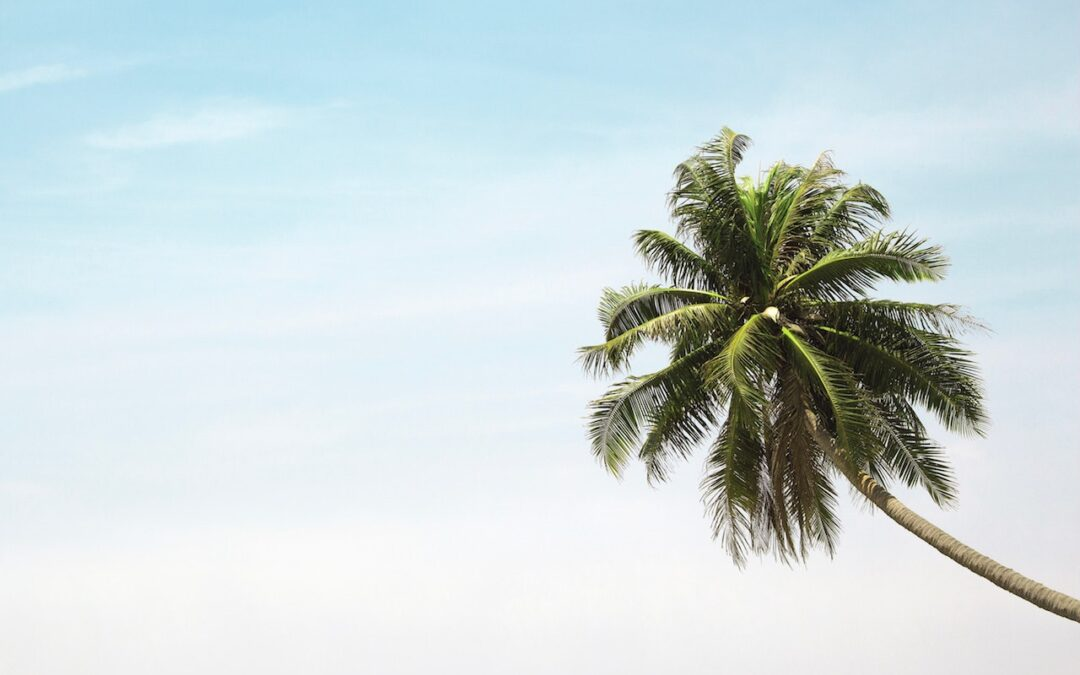 How Much Does Palm Tree Removal Cost?