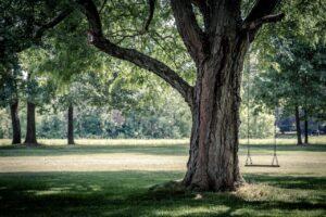 3 How Do I Repair a Broken Tree Branch